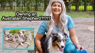 Owning an Australian Shepherd Dog? | What you Need to Know!