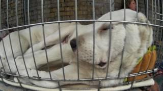 Красавцы Псы, Собаки и Щенята на Птичьем Рынке на Куреневке в Киеве!