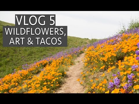 Thumbnail: Wildflowers, 14th Factory Art Show & Tacos in Los Angeles