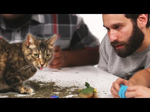 Stoned People Play With Cats On Catnip