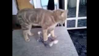 Розыгрыш игры с котом
