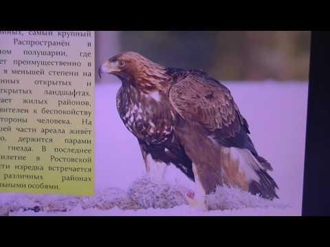 ВИДЕОБЕСЕДЫ. Выпуск 23. Редкие птицы Донского края