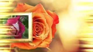 Я Дарю Тебе Розы