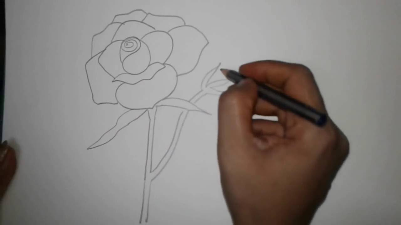 Drawing Tutorial:how To Draw A Rose For Beginner Lesson :1