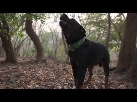 Courage The Dog Singing On Tum Hi Ho - Aashiqui 2