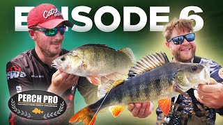 PERCH PRO 7 - Episode 6