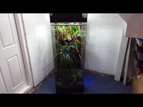 Panther chameleon natural vivarium part 1