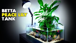 Aquascape Tutorial: Peace Lily Betta Fish Aquarium (How To: Step By Step Planted Tank Guide)