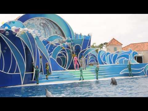 Dolphin Show San Diego Zoo/ Love travel USA
