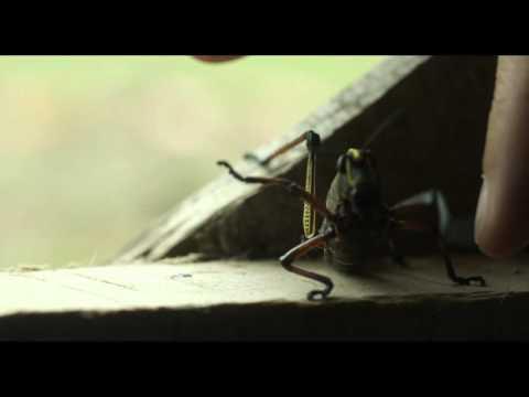 La rabia de Clara / Clara's rage / Trailer