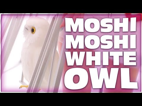 POPPY MOSHI MOSHI WHITE OWL MEANING