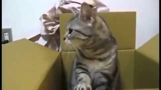 Смешное Видео : Кот знает азбуку морзе