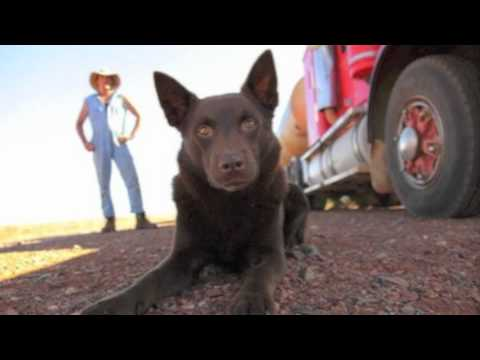 Red Dog (Pilbara)