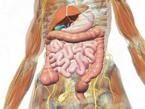 Gallbladder understanding your gallbladder youtube gallbladder understanding your gallbladder ccuart Image collections
