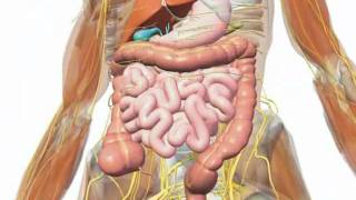 Gallbladder - Understanding Your Gallbladder