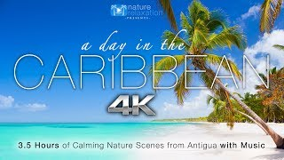 """A Day in the Caribbean"" 4K 3.5 HR Nature Relaxation™ Ambient Film + Calming Music"