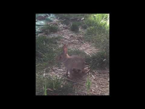 cute amp crazy backyard bunny