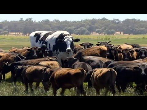 10 इतने बड़े जानवर नहीं देखे होंगे   10 ABNORMALLY LARGE ANIMALS THAT ACTUALLY EXIST