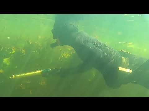 Подводная охота река Псел