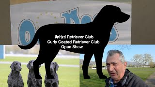 United Retriever Club And Curly Coated Retriever Club open Show  Three counties  Show ground Malvern