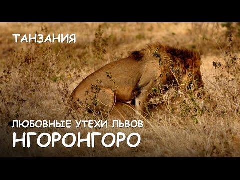 знакомство секс львов