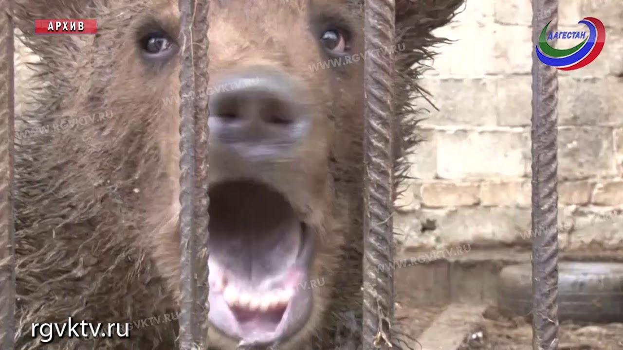 Правительство РФ утвердило перечень диких животных, запрещенных гражданам к содержанию