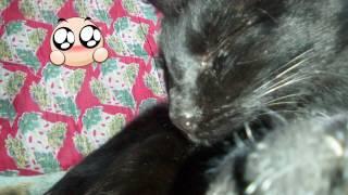 Третье видео на канале Люби kotov