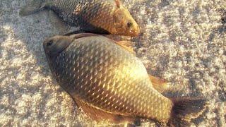 ЛОВЛЯ КАРАСЯ ЗИМОЙ НА УДОЧКУ зимняя рыбалка на карася