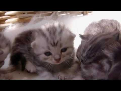 The Secret Life Of Kittens S01E01 HD