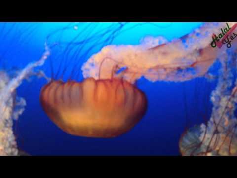 Omaha Zoo   Aquarium