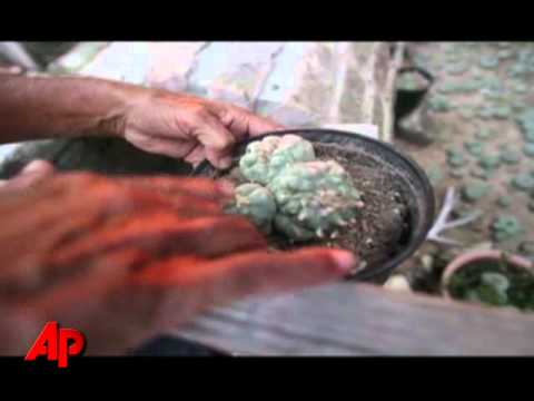 Video Essay: Legal Peyote Dealers Face Scarcity