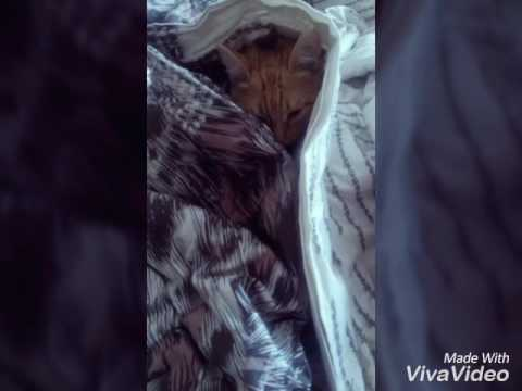 знакомство котенка с кошкой