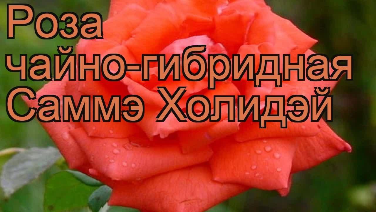 24 июл 2017. Подробнее: все розы, вы можете купить в нашем интернет-магазине moisad. Ua.