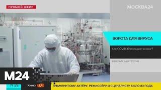 Ученые выяснили как коронавирус проникает в мозг Москва 24