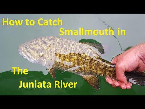 How To Catch Smallmouth Bass Juniata River Near Susquehanna
