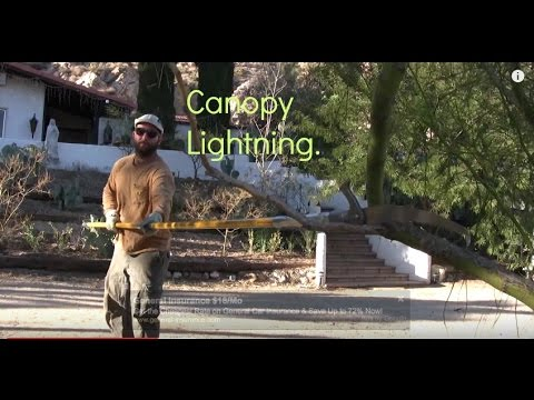 Palo Verde Tree T And Maintenance 1 Canopy Lightning