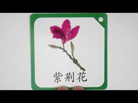 (中文早教卡/植物系列#4) Picture Card learn Chinese for Kids [Category: plant]