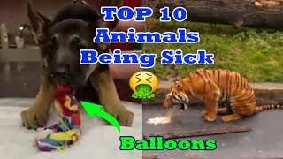 Top 10 Animals Being Sick - Animals Throwing Up Monkeys - Dogs and Cats + more animals