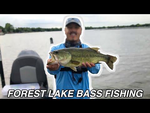 Forest Lake Bass Fishing