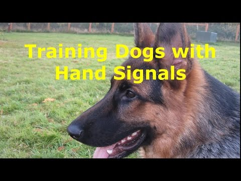 How to Teach Dogs  Hand Signals