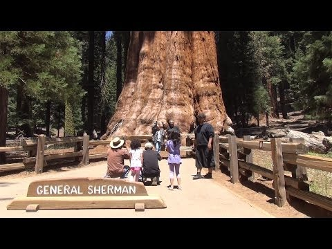 Travel in 3D - General Sherman Tree trail, Sequoia National Park, USA