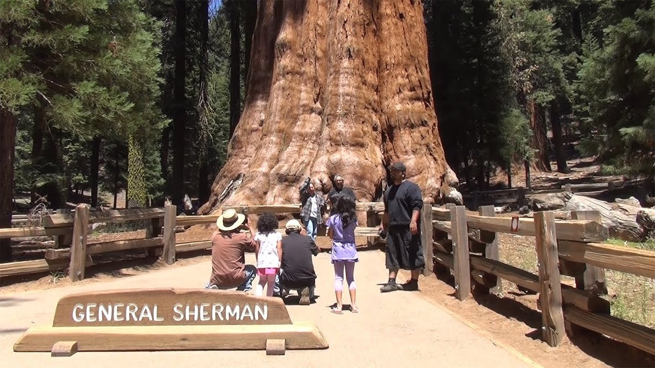 Exceptionnel Travel in 3D - General Sherman Tree trail, Sequoia National Park  EN59