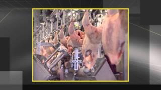 Птицефабрика Можайская(Коммерческий проект. Промо видео о будущей птицефабрике, которую планируют построить в Можайском районе...., 2011-12-17T07:23:42.000Z)