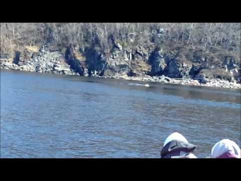 Whale watching in Tadoussac, Quebec at St. Lawrence river