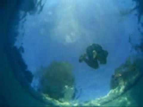 Underwater Pool Cam Youtube
