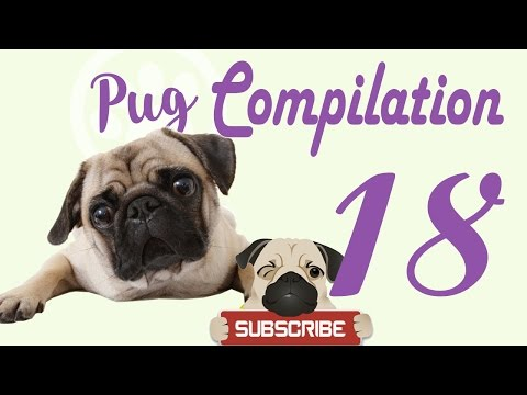 Pug Compilation 18 – Funny Dogs Compilation 2017 | Best Funny Dog Videos Ever