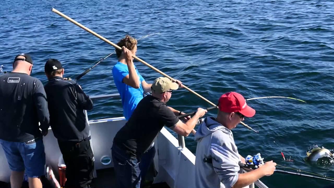 fiske i landskrona