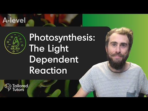 Photosynthesis: The Light Dependent Reaction