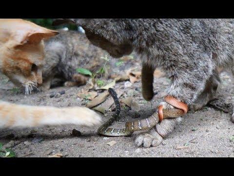 猫が集まっているので行ってみると蛇が猫の足に強力に絡みついていた【ドキュメントノネコ】
