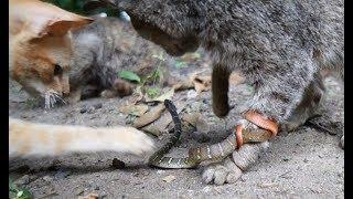 山小屋の裏に猫が集まっていたので急いでカメラ持って駆け つけてみまし...